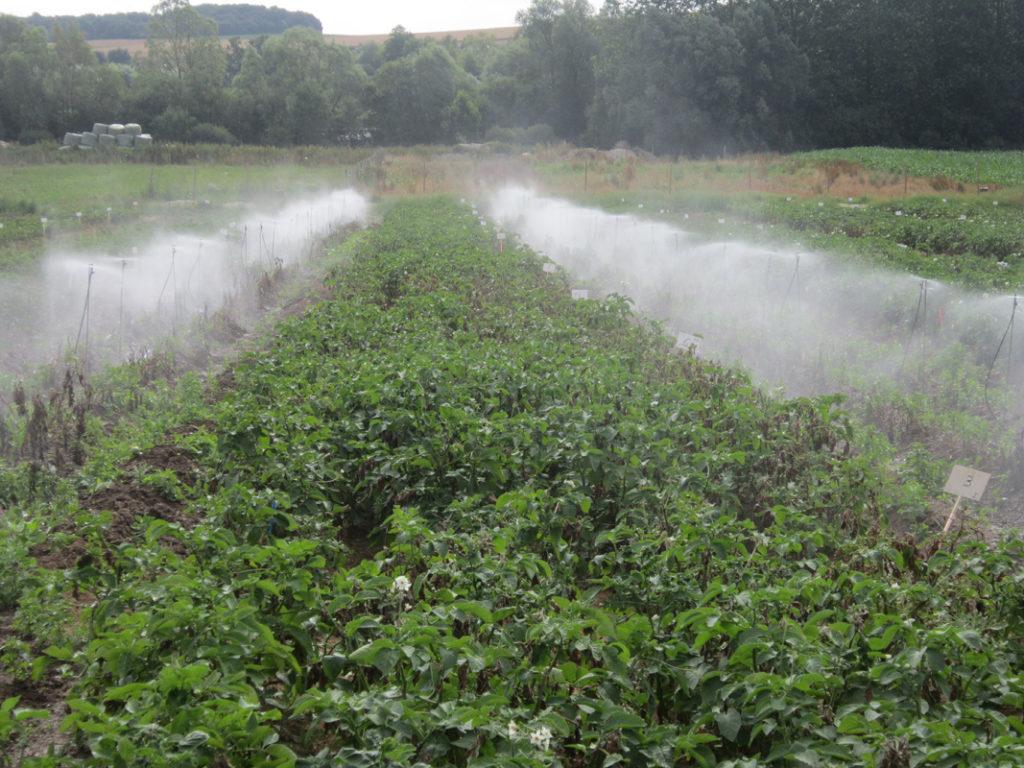 Station de brumisation sur un essai pommes de terre